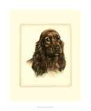 Danchin Red Cocker Spaniel Giclee Print by  Danchin