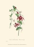Petite Blooms II Prints