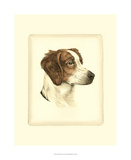 Danchin Brittany Spaniel Giclee Print by  Danchin