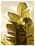 Palm Fronds IV Poster by Rachel Perry