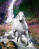 Bob Langrish foto, wit paard voor waterval Posters