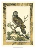 Majestic Perch III Giclee Print