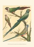 Cassell's Parakeets III Posters par  Cassell