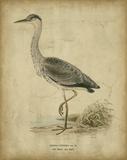 Vintage Heron II Póster por Von Wright