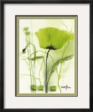 Coquelicot Vert II Poster by  Marthe