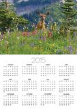 Deer in Wildflowers Posters by Craig Tuttle
