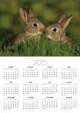 Two Young Rabbits Touch Noses Poster by Andrew Parkinson
