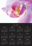 Moth Orchid Prints by Frank Krahmer