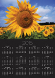 Sunflower field, summer Posters by Tony Craddock