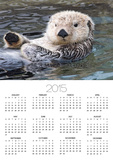 Southern sea otter hold paws up to conserve heat Prints by Hal Beral