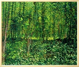 Woods and Undergrowth, c.1887 Framed Canvas Print by Vincent van Gogh