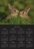 Two Young Rabbits Touch Noses Posters by Andrew Parkinson