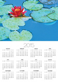 Lily Pads and Flower Blossom Posters by Cindy Kassab