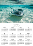 Southern Stingrays Swimming at Stingray City Posters by Paul Souders