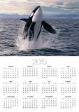 Breaching Killer Whale Prints by Tom Brakefield