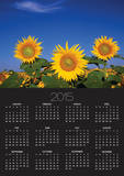 Sunflower Crop in Full Bloom Posters by Mike Grandmaison