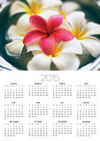 Frangipani Flowers in Bowl of Water Posters by Thomas M. Barwick