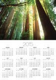 Redwood Forest Prints by Jim Zuckerman