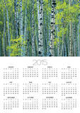 Spring Foliage on Trembling Aspen, Jasper National Park, Alberta, Canada. Print by Mike Grandmaison