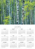 Spring Foliage on Trembling Aspen, Jasper National Park, Alberta, Canada. Print by Mike Grandmaison