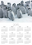 Emperor Penguin Chicks Posters by Frank Krahmer