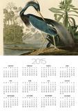 Louisiana Heron Prints by John James Audubon