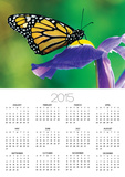 Monarch Butterfly on a Dutch Iris Posters by Darrell Gulin