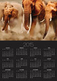 African Elephants Posters by Martin Harvey