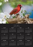 Close-up of Cardinal in Blooming Tree Prints by Gary Carter
