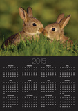 Young Rabbit Kits Rubbing Noses Poster by Andrew Parkinson