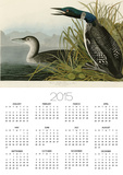 Great Northern Diver or Loon Posters by John James Audubon