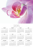 Moth Orchid Posters by Frank Krahmer