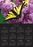 A Canadian Tiger Swallowtail Butterfly (Papilio Canadensis) in the Maritimes, Newfoundland and Labr Posters by  Barrett & Mackay