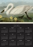 Common American Swan Posters by John James Audubon