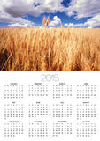 Wheat Field Growing Beneath Puffy Clouds Posters by Craig Tuttle