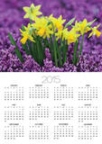 Yellow Daffodils in Purple Heather Prints by Markus Botzek