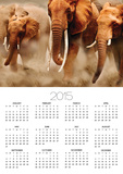 African Elephants Photo by Martin Harvey