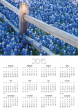 Bluebonnets Along Fenceline Print by Terry Eggers