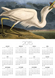 """Great White Heron from """"Birds of America"""" Posters by John James Audubon"""