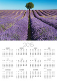 Lavender Field and Almond Tree in Provence Posters by Frank Krahmer