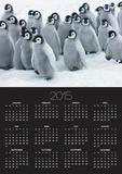 Emperor Penguin Chicks Posters by Frank Krahmer