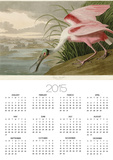 Roseate Spoonbill Posters by John James Audubon