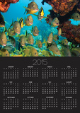 Schooling Fish Under Coral Ledge Posters by Stephen Frink