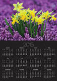 Yellow Daffodils in Purple Heather Print by Markus Botzek