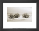 Snow Trees, New York Prints by Dickens