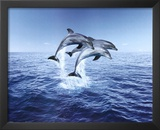 Dolphin Trio Poster