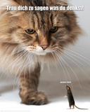 Verpiss Dich Katze Pósters