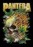 Pantera - Skull Leaf Plakater