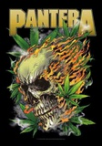 Pantera - Skull Leaf Láminas