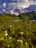 Mt. Rainier National Park, Mt. Rainier and Pasque Flowers, Washington, USA Photographic Print by David Cobb